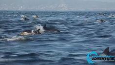 ''Super stado'' delfinów. Niecodzienny widok