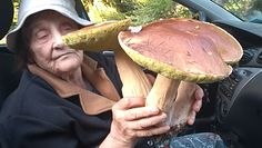 Wysyp grzybów w lasach