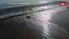 Mała foka nad Bałtykiem. Niespodziewane spotkanie