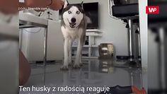 Nieufny pies. Spodziewał się, co go czeka