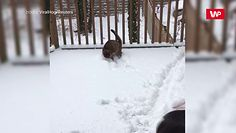 Kot i jego pierwszy śnieg. Zabawa śnieżnymi kulkami