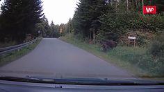 Żubry wyszły na drogę