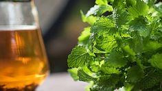 Jakie zioła są dobre na wątrobę?