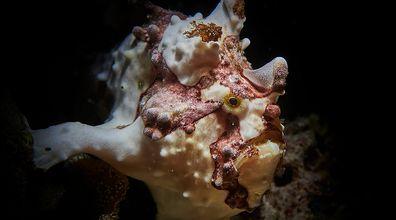 Fauna Oceanu Południowego. Ekspert tłumaczy, na czym polega wyjątkowość zwierząt w tej części świata