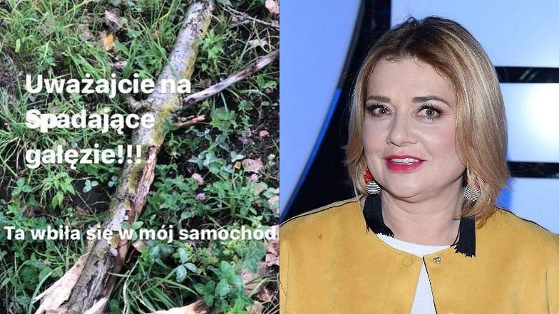 """Przejęta Małgorzata Ostrowska-Królikowska przestrzega przed spadającymi gałęziami: """"Ta WBIŁA SIĘ w mój samochód"""" (FOTO)"""