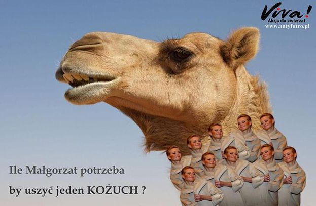 Obrońcy zwierząt atakują Kożuchowską!