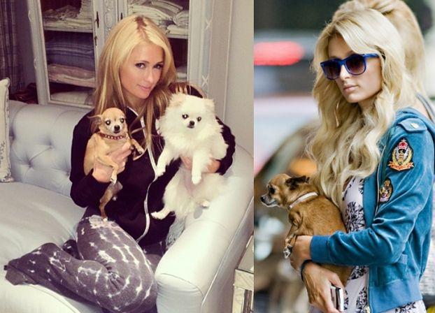 Paris oddała poprzedniego psa swojej matce!