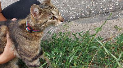 Zawinął kotkę w plastikowy worek i wyrzucił ją przy drodze. Teraz grozi mu więzienie