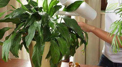 Rośliny przed urlopem. Co zrobić, by nie wyschły podczas nieobecności