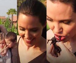 Angelina Jolie razem z dziećmi jedzą skorpiony i pająki... (FOTO)
