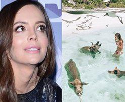 """Ania Wendzikowska kąpie się ze świniami na Karaibach. Internauci: """"Dla turystyki i fajnych zdjęć cierpią zwierzęta!"""""""
