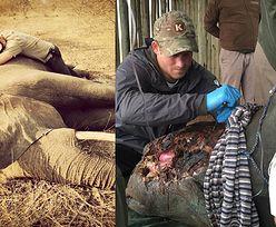 """Książę Harry ratuje słonie i nosorożce! """"Co za bezsensowne marnowanie piękna!"""" (ZDJĘCIA)"""