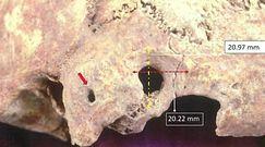 Niezwykłe znalezisko. Przebadali szkielety sprzed 1500 lat
