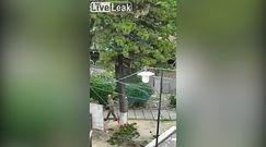 'Eksperci'' ścinali drzewo. Oto przykład, jak tego nie robić