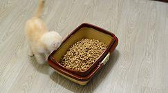 Kot wypróżnia się poza kuwetą. Specjalista radzi, jak sobie z tym poradzić