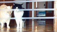 Rzucił wyzwanie grubemu kotu. Sprytna reakcja futrzaka to hit sieci