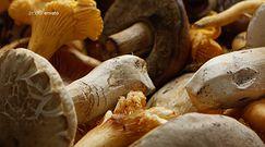 Udane grzybobranie. Oto co musisz wiedzieć udając się do lasu