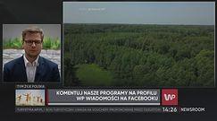 Wycinka lasów na opał? Minister środowiska dementuje