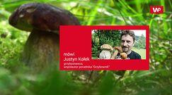 Wysyp grzybów w maju. Zobacz zdjęcia z lasu