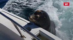 Podwieźli go łodzią. Rybacy doświadczyli niezwykłego spotkania