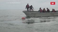 Na ratunek humbakowi. Wielka akcja w Meksyku