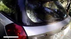 Niedźwiedź uwięziony w samochodzie w USA. Nie wiadomo, jak wsiadł do auta