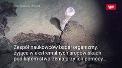 Antybiotyk na dnie oceanu