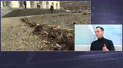 Wycinka drzew. Publicyści: Premier nie do końca nad wszystkim panuje