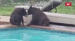 Niedźwiedzie miały dość. Wideo opublikowała policja