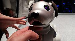 CES 2019 - robot-pies Aibo