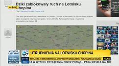 Dziki sparaliżowały ruch samolotów na lotnisku w Warszawie