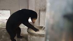 Niezwykły film z niedźwiedziem. Nagranie z rezerwatu
