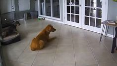 Psy spały przed obiektywem kamery w domu. Nagle stało się coś zaskakującego