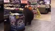 Niedźwiedź w sklepie. Wtargnął do marketu w Kalifornii i wyszedł z paczką czipsów
