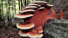 Leśnik pokazał, co zauważył w lesie