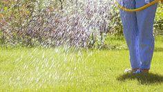 Zasady prawidłowego podlewania trawnika. Będzie piękną wizytówką ogrodu