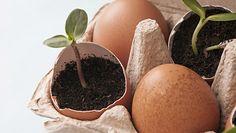 Dzięki tym sposobom więcej nie wyrzucisz skorupek jaj do kosza
