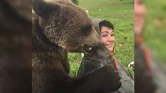 Niedźwiedź Wasilij. Żyją z drapieżnikiem. Tak działa nietypowa organizacja