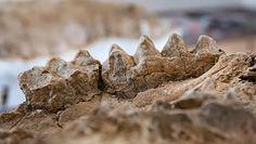 Las pełen prehistorycznych skamieniałości. Niesamowite odkrycie w Kalifornii