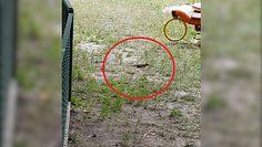 Plaga szczurów na placu zabaw. Szokujące nagranie mieszkańca Lublina