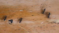 3 sposoby na pozbycie się mrówek