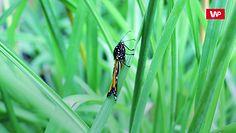 Wymieranie owadów. Naukowcy biją na alarm