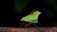 """Miniaturowe roboty-mrówki są w stanie """"ukraść"""" dwutonowy samochód"""