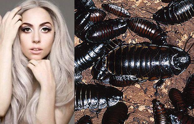 Gaga zamówiła kapelusz z... żywych karaluchów!