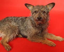 Kundelek Tygodnia: Szyszka, czyli psia celebrytka z charakterem