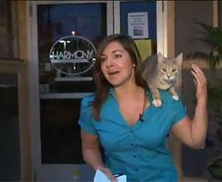 Kot skacze na prezenterkę wiadomości!