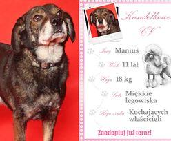 Kundelek Tygodnia: Poznajcie Maniusia, psiego celebrytę z prawdziwego zdarzenia