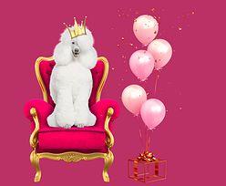 15. urodziny Pudelka. Ogłaszamy WYNIKI urodzinowego KONKURSU!