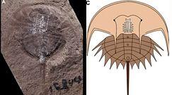 Mózg zwierzęcia sprzed 310 milionów lat. Wyjątkowe okrycie naukowców w USA