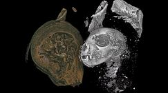 Mumie zwierząt w Egipcie. Zaskakujące odkrycie po prześwietleniu zabalsamowanych ciał